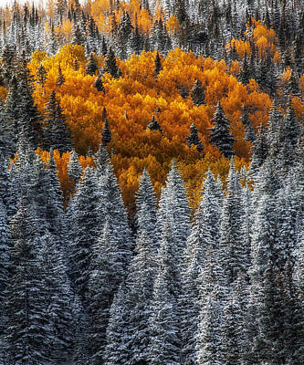 Jeff Johnson Photograph - Seasonal Mixup by Jeff Johnson