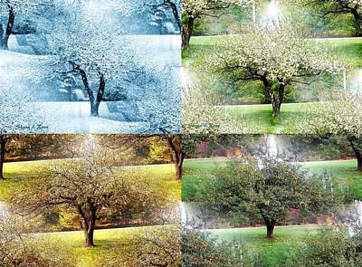 Photograph - Seasonal Orchard Collage by Shana Rowe Jackson