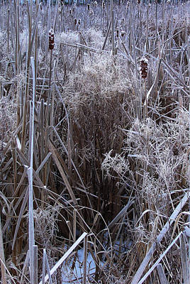 Photograph - Seasonal Stand Of A Marsh by Terrance DePietro