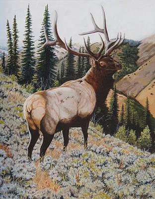 Painting - Seasoned Veteran by Darcy Tate