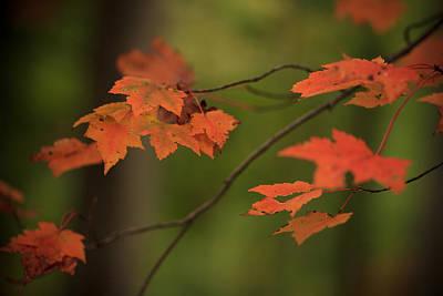 Virginia Photograph - Seasons Change by Shane Holsclaw