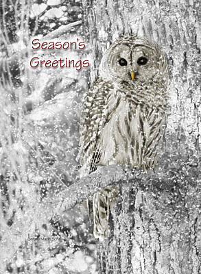 Photograph - Season's Greetings Card Winter Barred Owl by Jennie Marie Schell