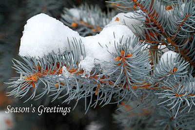 Photograph - Season's Greetings by Donna Kennedy