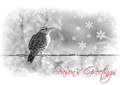 Meadowlark Wall Art - Photograph - Season's Greetings by Elizabeth Budd