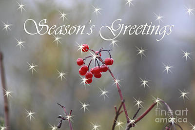 Photograph - Seasons Greetings Red Berries by Cathy Beharriell