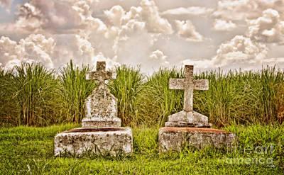 South Louisiana Photograph - Seasons Of Life by Scott Pellegrin