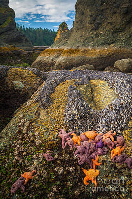 Olympic Peninsula Photograph - Seastars And Barnacles by Inge Johnsson