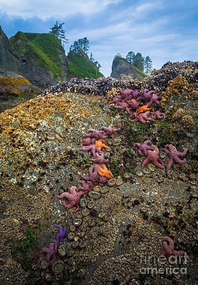 Olympic Peninsula Photograph - Seastars At Point Of The Arches by Inge Johnsson