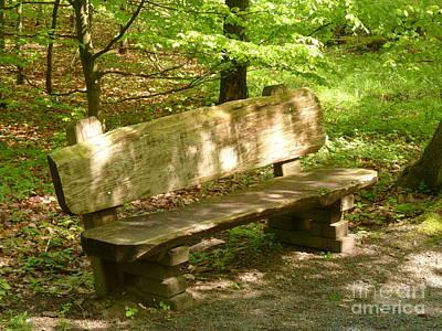 Photograph - Seat In Nature by Eva-Maria Di Bella