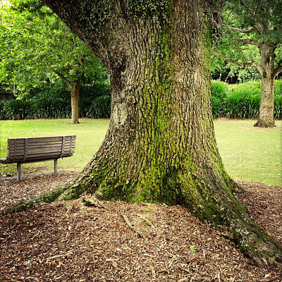 Photograph - Seat In Park by Les Cunliffe