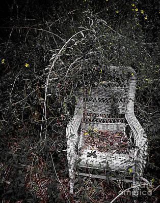 Photograph - Seat With A View by Ken Frischkorn