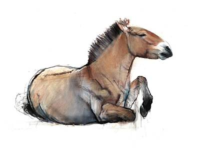 Seated Przewalski, 2011, Charcoal, Conté And Pastel On Paper Art Print by Mark Adlington