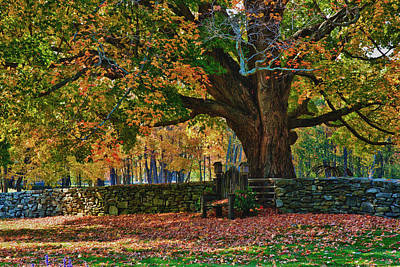 New Hampshire Tours Photograph - Seated Under The Fall Colors by Jeff Folger