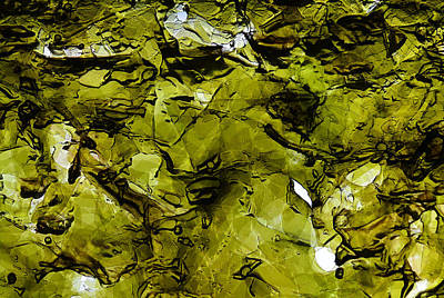 Photograph - Seaweed 2 by Dragan Kudjerski