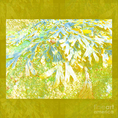 Photograph - Seaweed Abstract by Barbara Moignard