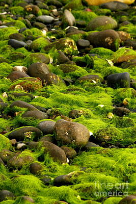 Photograph - Seaweed And Rocks 2 by Roger Soule