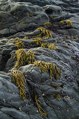 Photograph - Seaweed And Rocks by Roger Mullenhour