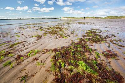 Seaweed And Sand Ripples Art Print by Ashley Cooper
