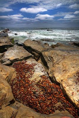 La Jolla Cove Photograph - Seaweed Cove by Peter Tellone