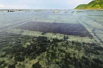 Seaweed Farming, Bali Art Print by Science Photo Library