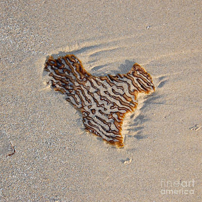 Photograph - Seaweed Heart by Debra Thompson