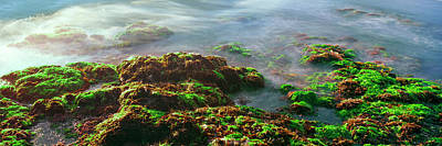 Roca Photograph - Seaweed On Rocks At The Coast, Las by Panoramic Images