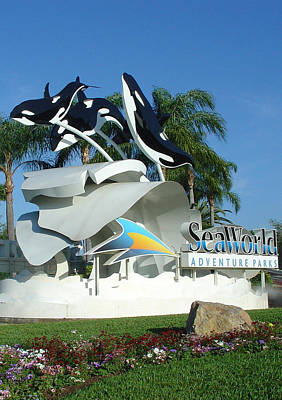 Photograph - Seaworld Anticipation by David Nicholls
