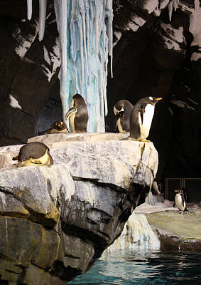 Photograph - Seaworld Penguins by David Nicholls