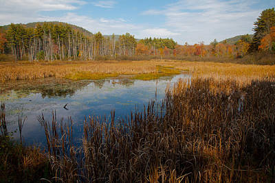 Photograph - Secluded Adirondack Pond by David Patterson