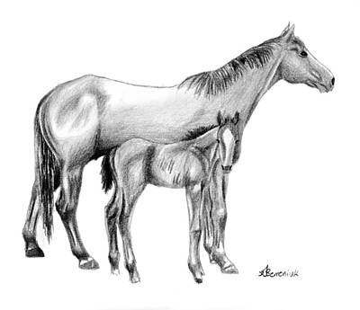 Bay Horse Drawing - Second Generation by Kayleigh Semeniuk
