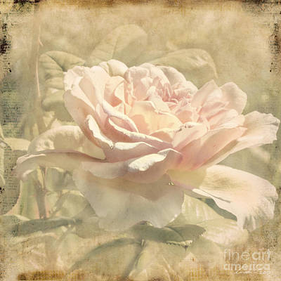 Photograph - Secondhand Rose by Linda Lees
