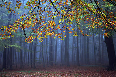 Autumn Landscape Photograph - Seconds Before The Light Went Out by Roeselien Raimond