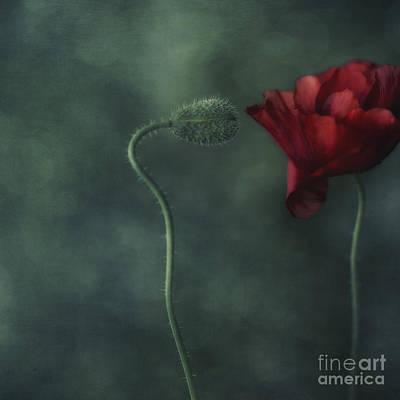 Flower Buds Photograph - Secret Affair by Priska Wettstein