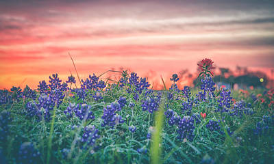 Photograph - Secret Bluebonnets by Chris Multop