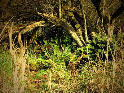 Photograph - Secret Hide Away In The Forest by Joyce Dickens