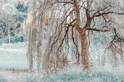 Photograph - Secret Life Of The Willow Tree. Nature In Alien Skin by Jenny Rainbow
