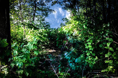 Photograph - Secret Path by Donna Lee