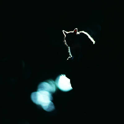 Photograph - Secret Squirrel by Joe  Connors