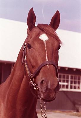 Horse Racing Photograph - Secretariat by Retro Images Archive