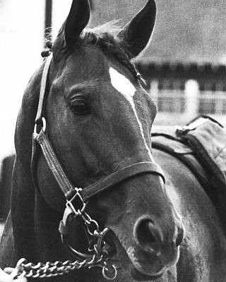 Photograph - Secretariat Vintage Horse Racing #02 by Retro Images Archive