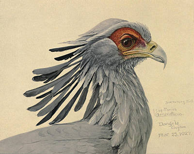 African Wild Birds Painting - Secretary Bird by Rob Dreyer