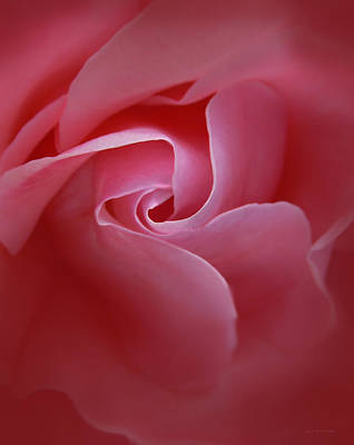 Photograph - Secrets Pink Rose Abstract by Jennie Marie Schell