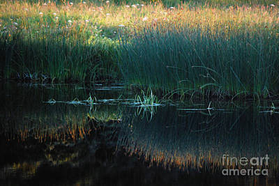 Sedges At Sunset Art Print by Cynthia Lagoudakis