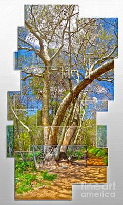 Sedona Arizona Big Tree Art Print by Gregory Dyer