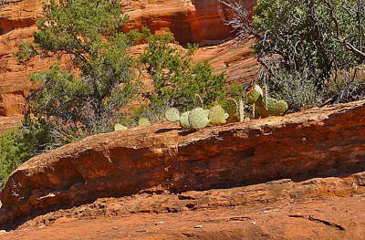 Photograph - Sedona Cacti by Denise Mazzocco