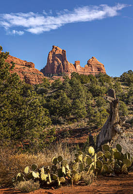 Photograph - Sedona Cactus And Sandstone by Mary Jo Allen