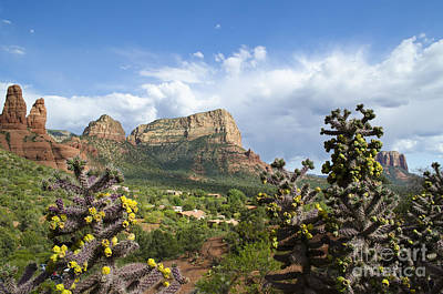 Art Print featuring the photograph Sedona Cactus In Bloom by Maria Janicki
