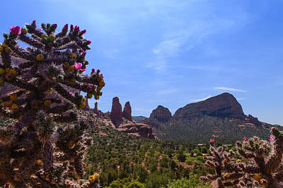 Photograph - Sedona Cactus by John Johnson