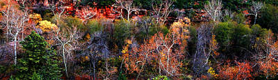 Photograph - Sedona Fall by Peter Cutler