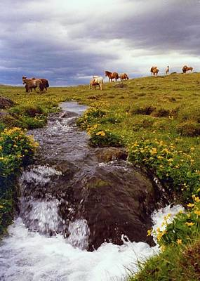 Art Print featuring the photograph See The Pretty Horses by Debra Kaye McKrill